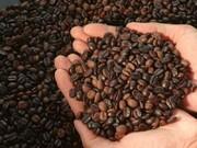 ایرانی ها شش برابر کمتر از مردم دنیا کافئین مصرف می کنند