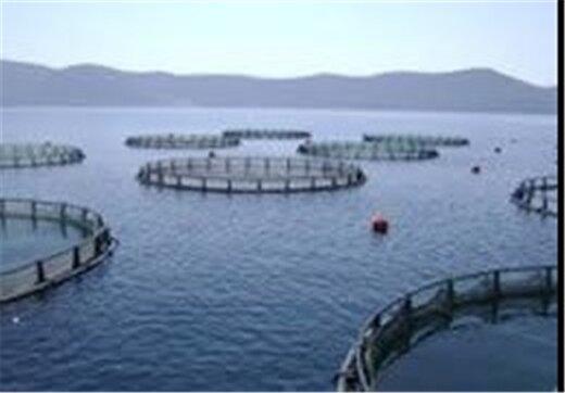 «فیلماهی» و «ماهی سیبری» پس از ۸ سال در گیلان تکثیر میشود