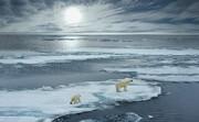 خرسهای قطبی تا پایان قرن منقرض میشوند؟