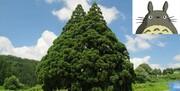 درخت کارتونی ژاپن با عمر ۱۰۰۰ ساله / عکس