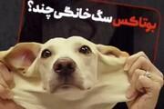 ببینید | بوتاکس و عمل زیبایی بینی سگ هم رسید!