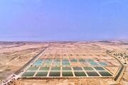 تبدیل قشم به برند منطقه ای پرورش میگو/ایجاد چرخه ۶۰۰ میلیارد ریالی مولد سازی میگو در جزیره