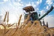 ۱۸ هزار تن گندم از کشاورزان خراسان جنوبی خریداری شد