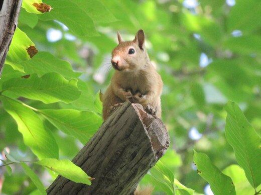 هلن به ۶ سنجاب زندگی دوباره بخشید