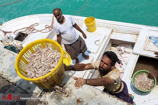 تصاویر | زندگی ماهیگیران اسکله بحرکان