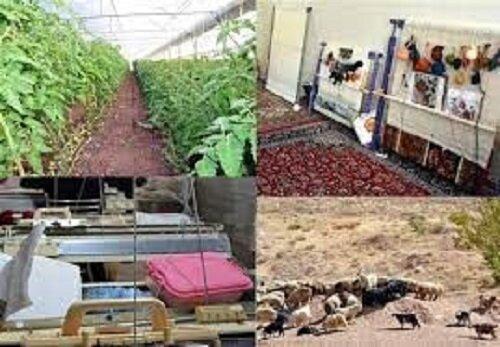 ۵۱۲ میلیارد تومان تسهیلات اشتغال روستایی در استان کرمان پرداخت شد
