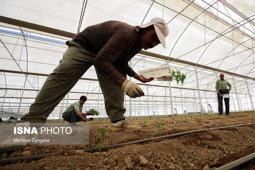 کشت گلخانهای برای صادرات