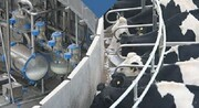 تولید ۲۵۶ هزار تن شیر  در چهارمحال و بختیاری