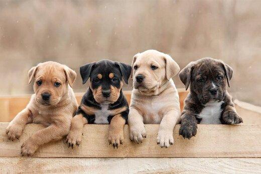 جمعه بازار سگ های اشرافی در حاشیه تهران/ سگ ماست خور داریم قیمتش 50میلیونه