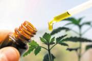 خرید این داروهای گیاهی ممکن است به قیمت جانتان تمام شود