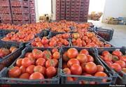 ورود گوجهفرنگی از سایر استانها به شهر ارومیه ممنوع شد