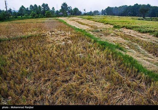 دولت سه هزار میلیارد تومان برای بیمه کشاورزی کمک می کند