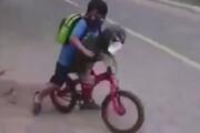 ببینید   زدن ماسک به سگ در آمریکای لاتین