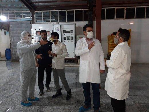 بازدید  سرزده مدیرکل دامپزشکی کهگیلویه وبویراحمد از کشتارگاه های صنعتی طیور شهر یاسوج