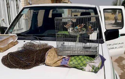 متخلف حرفهای صید پرندگان در دام محیط بانان گرفتار شد