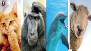 در ذهن حیوانات چه میگذرد؟ / برای فهم احساسات حیوانات راهزیادی در پیش است