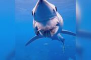 ببینید | تصویری از کوسه ماکو که فکش توسط ماهیگیرها آسیب دید