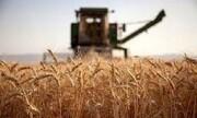 ذخایر گندم انبارهای مازندران معادل ۳ برابر نیاز استان است
