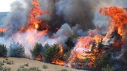 Iran - KhabarOnline – Interview on Forest Fires with Mr Peter Moore, FAO Forestry Officer