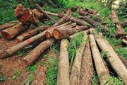 ببینید | قاچاقچیان چوبهای جنگلی در دام نیروهای منابع طبیعی
