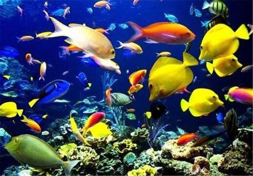 افزایش ۳۰ درصدی تولید ماهیان زینتی در چهارمحال و بختیاری