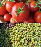 قیمت خرید حمایتی سیب صنعتی و گوجه فرنگی تعیین شد