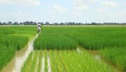 اختلاف وزارت جهاد کشاورزی و وزارت نیرو بر سر آمار آب / میزان مصرف آب کشاورزی چه مقدار است؟
