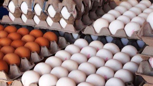 تخم مرغ ارزان چه زمان به بازار می آید؟