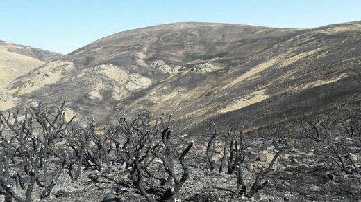 نابودی ۱۵۰ هکتار از گونه های گون و گیاهان علوفه ای مرتعی/ اطفا حریق مراتع روستای نارین آباد