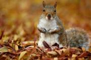 ببینید | التماس یک سنجاب نجات یافته از آتش کالیفرنیا برای نوشیدن آب