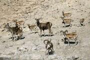 کاهش دو سوم جمعیت حیات وحش جهان
