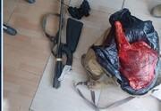شکارچی غیرمجاز با کشف لاشه کل وحشی در شرق تهران بازداشت شد