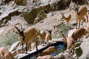 ببینید | ضدعفونی مناطق حفاظتشده استان تهران برای پیشگیری از آلودگی حیات وحش