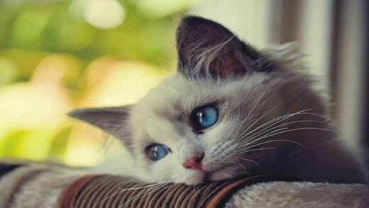 چرا نباید در خانه یا آپارتمان گربه نگهداری کرد؟
