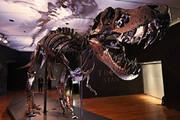 ببینید | حدود قیمت فروش دایناسور 12 متری در حراجی نیویورک مشخص شد!