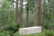 ببینید | ساخت تابوتی از قارچ