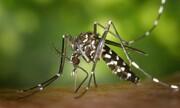 ارتباط سکته مغزی با ویروسهایی که از طریق پشه منتقل میشوند