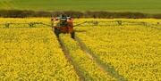 کشاورزان قزوینی نسبت به کشت کلزا اقدام کنند