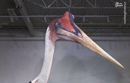 عکس/ بزرگترین پرنده تاریخ با طول ۳ متر
