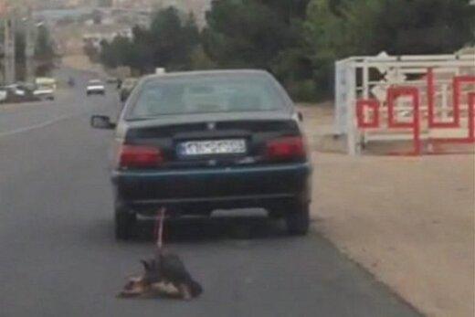ببینید | سکانسی تلخ از حیوان آزاری در مازندران