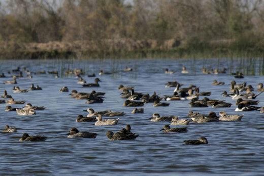 ببینید | تکذیب دیگر فایده ندارد؛ کشتار گسترده پرندگان مهاجر در هورالعظیم