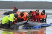 ببینید | تصویری دلخراش از خودکشی دستهجمعی نهنگها
