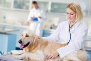 ببینید | نگاه پرمعنا و عاطفی سگ به دامپزشک