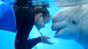 ببینید | واکنش بسیار جالب نهنگ مادهای که عاشق نگهبان خود شده است
