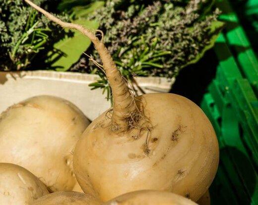 بهترین آنتی بیوتیک گیاهی را بشناسید