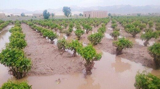 حوادث غیرمترقبه، ۸۵۰ میلیارد تومان به کشاورزی آذربایجانغربی خسارت زد