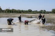 تصاویر | مرگ آبزیان در رودی که دیگر زاینده نیست