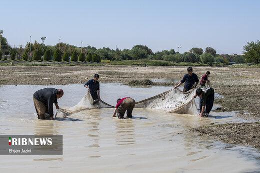 مرگ آبزیان در کشته رود