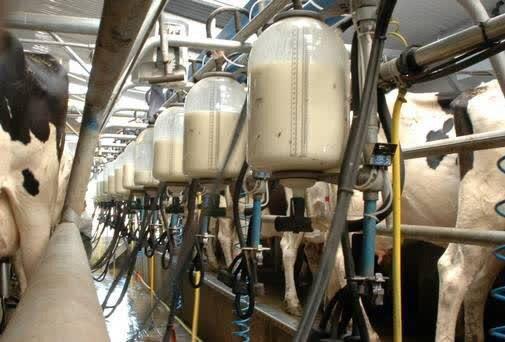 چهارمحال و بختیاری ،رتبه دوم کشور در سرانه تولید شیر خام