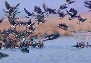 جنایت علیه محیط زیست و پرندگان مهاجر در خوزستان/ تصاویر